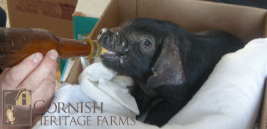 From Cornish Heritage Farms - large - 4891656813